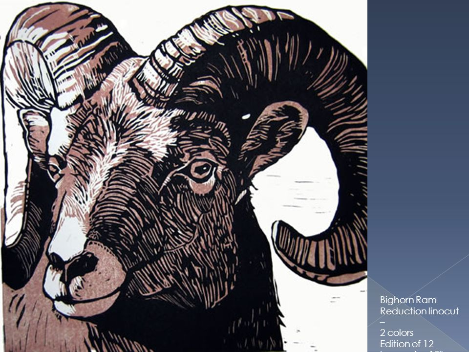 Bighorn Ram Reduction linocut – 2 colors Edition of 12 Image size 12 x 12