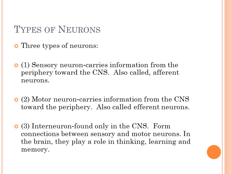 T YPES OF N EURONS Three types of neurons: (1) Sensory neuron-carries information from the periphery toward the CNS.