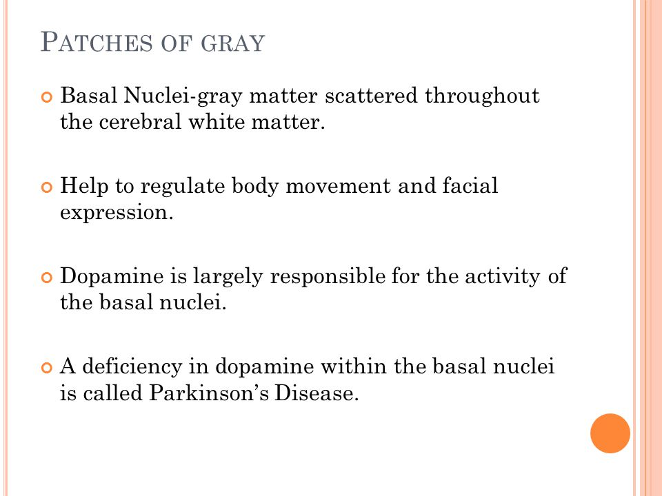 P ATCHES OF GRAY Basal Nuclei-gray matter scattered throughout the cerebral white matter.