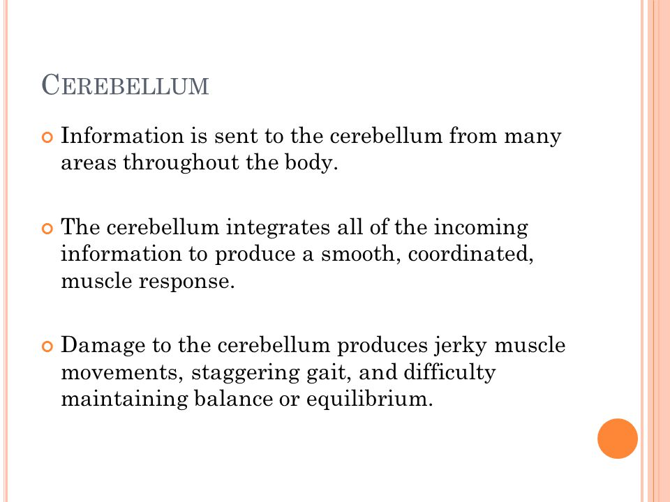 C EREBELLUM Information is sent to the cerebellum from many areas throughout the body.