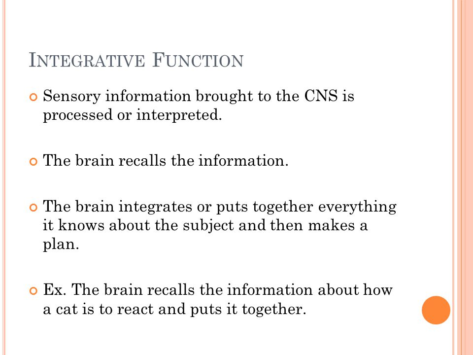 I NTEGRATIVE F UNCTION Sensory information brought to the CNS is processed or interpreted.