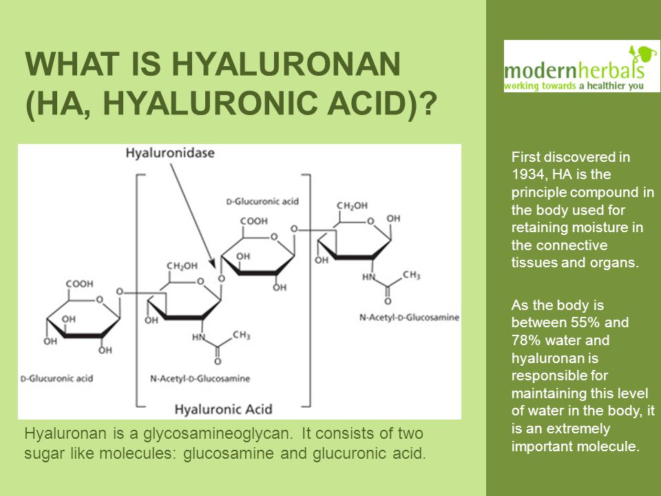 CLINICAL STUDIES ON HYALURONAN High Molecular Weight HA from bacterial fermentation was radioactively labelled with 99-technetium and its oral uptake in rats and dogs was studied.