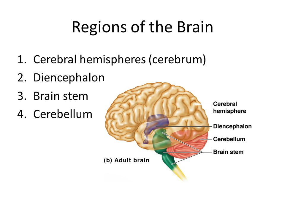 Alzheimer's Disease Progressive degenerative brain disease Mostly seen in the elderly, but may begin in middle age Structural changes in the brain include abnormal protein deposits and twisted fibers within neurons Victims experience memory loss, irritability, confusion, and ultimately, hallucinations and death