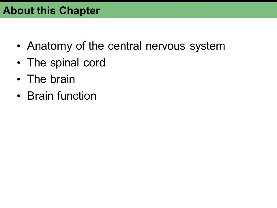 About this Chapter Anatomy of the central nervous system The spinal cord The brain Brain function