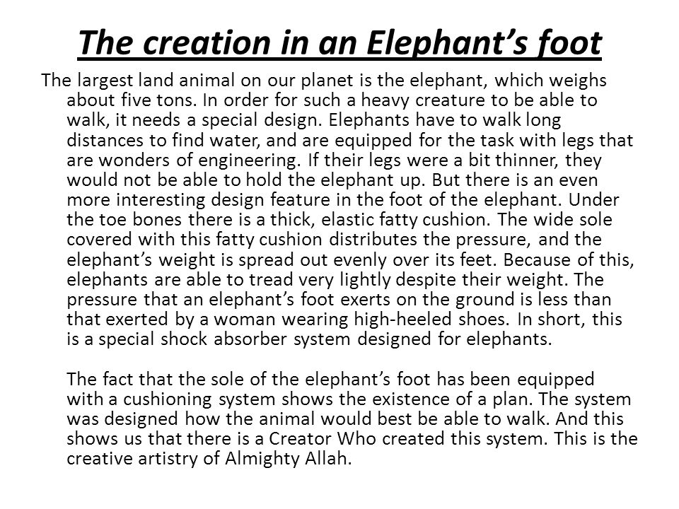 The creation in an Elephant's foot The largest land animal on our planet is the elephant, which weighs about five tons.
