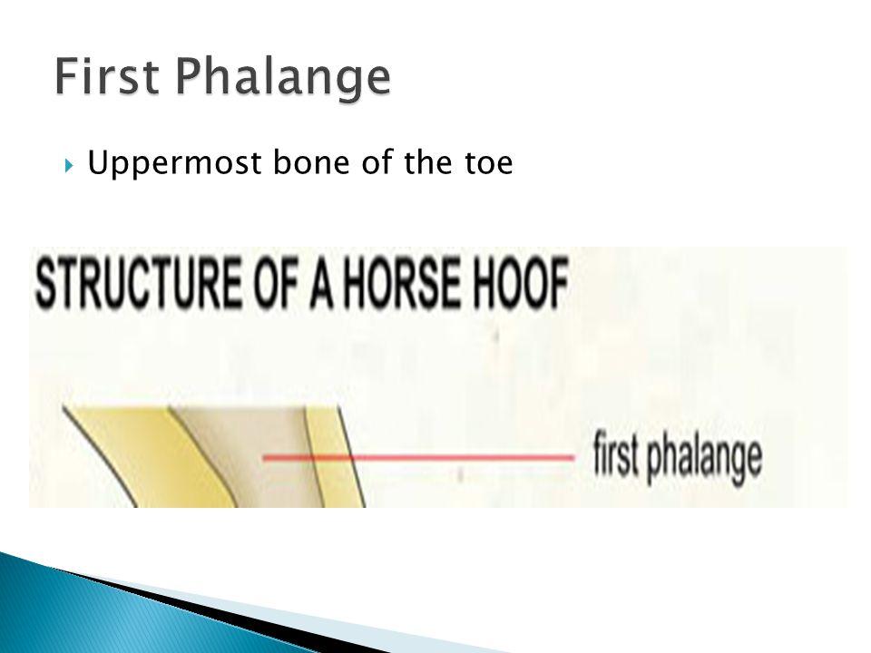 Jordan Callahan No hoof, no horse
