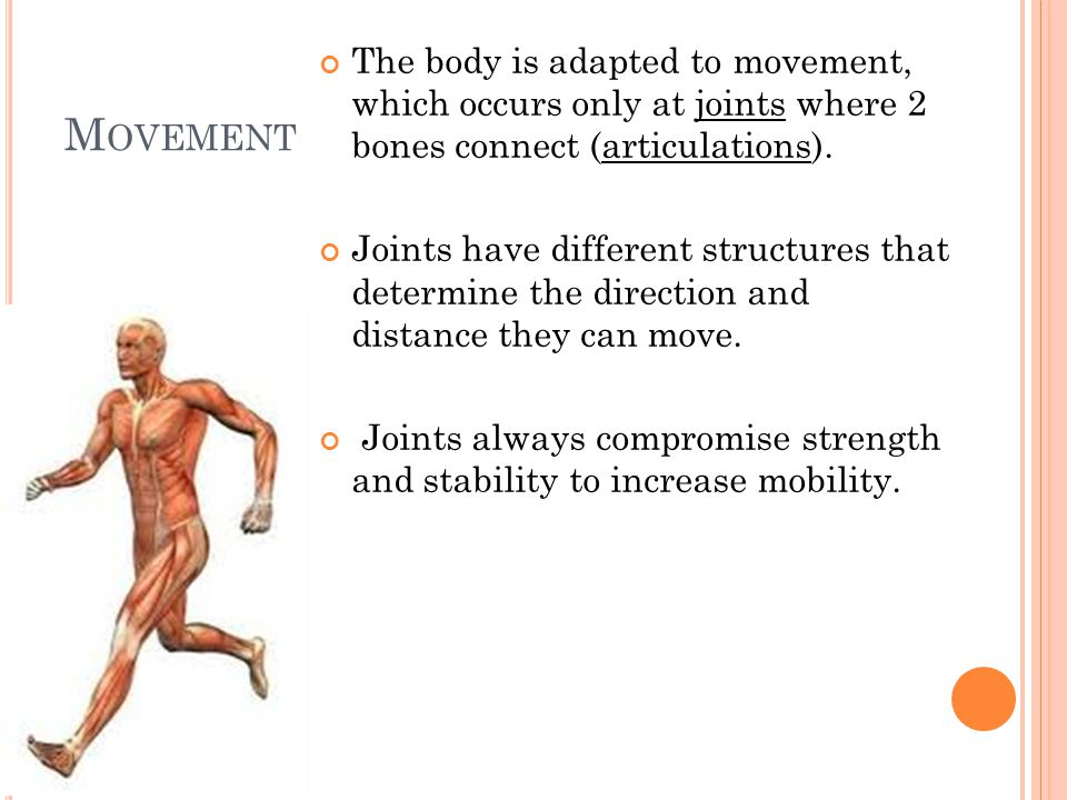 F LEXION AND EXTENSION Flexion: in the anterior-posterior plane reduces the angle between elements Extension: in the anterior-posterior plane increases the angle between elements Hyperextension: extension past anatomical position