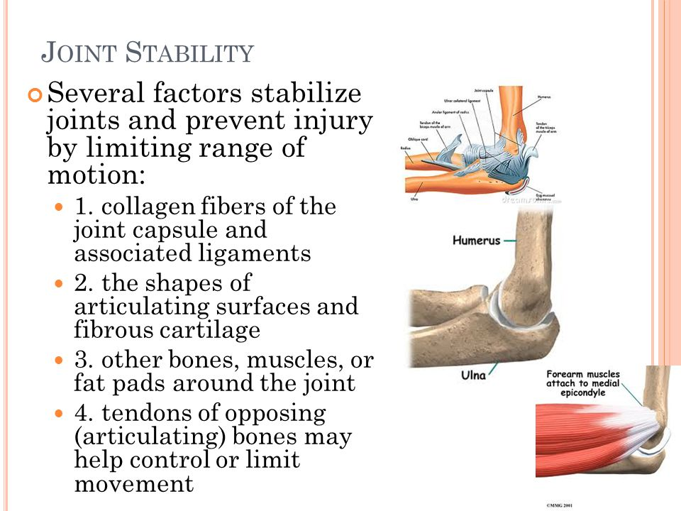 J OINT S TABILITY Several factors stabilize joints and prevent injury by limiting range of motion: 1.