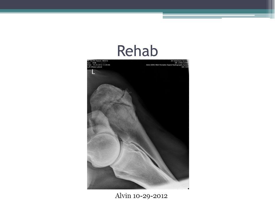 Rehab Alvin 10-29-2012