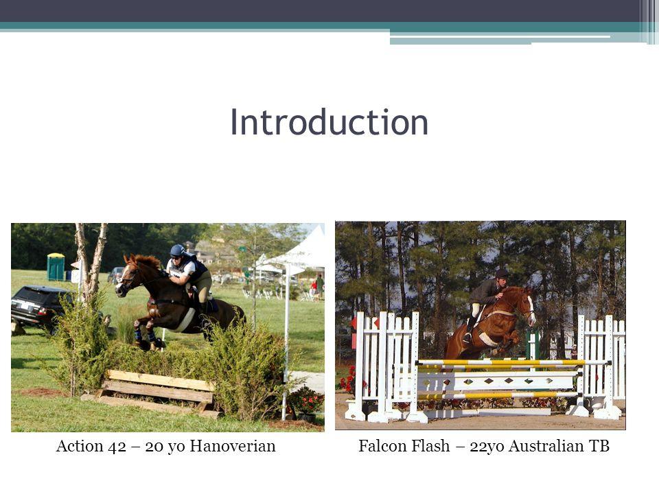 Introduction Action 42 – 20 yo Hanoverian Falcon Flash – 22yo Australian TB