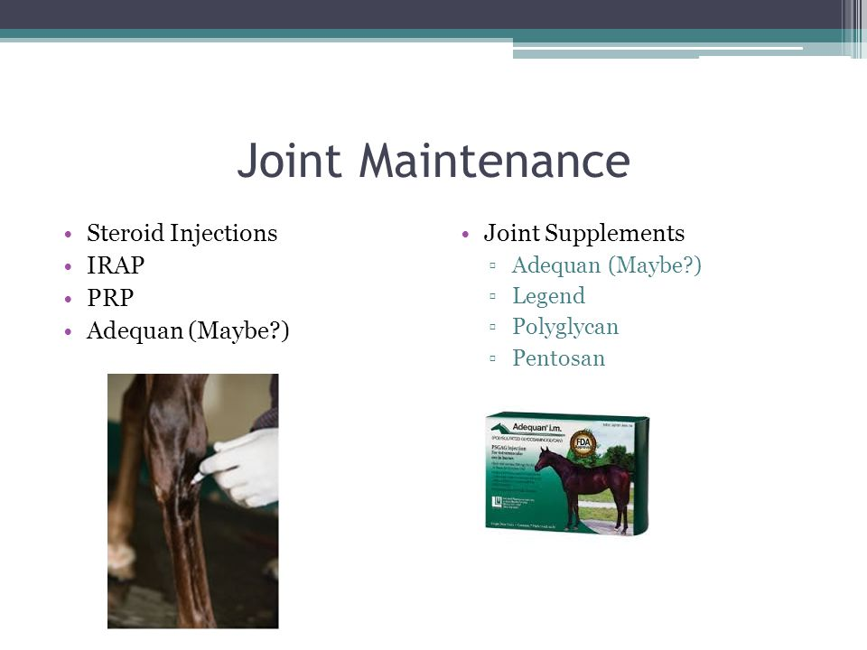 Joint Maintenance Steroid Injections IRAP PRP Adequan (Maybe?) Joint Supplements ▫Adequan (Maybe?) ▫Legend ▫Polyglycan ▫Pentosan