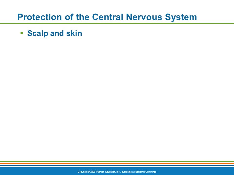 Copyright © 2009 Pearson Education, Inc., publishing as Benjamin Cummings Protection of the Central Nervous System  Scalp and skin