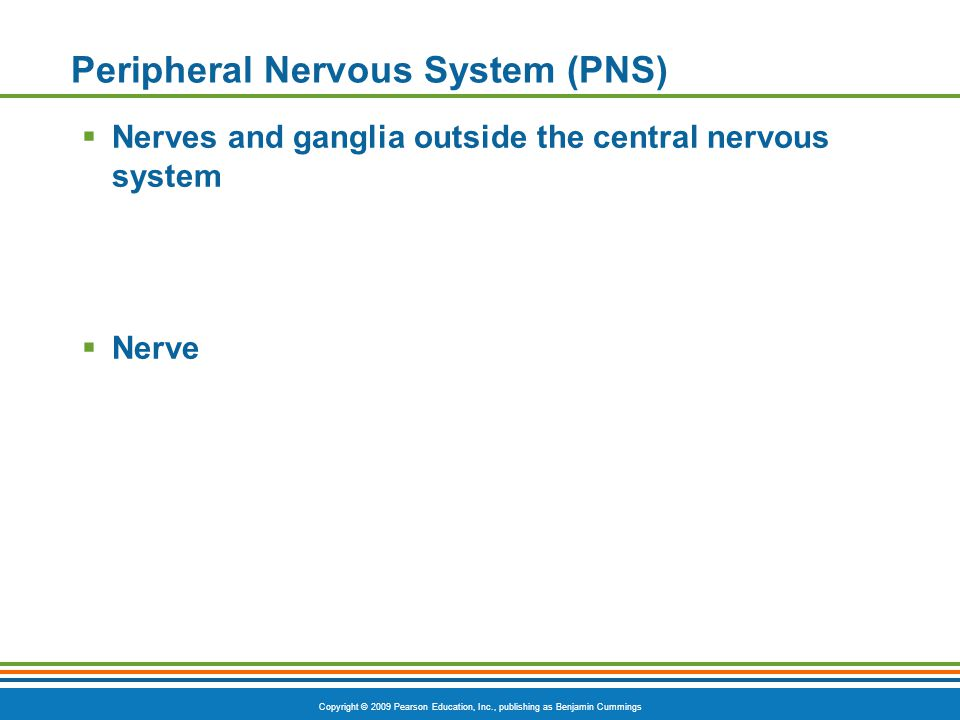 Copyright © 2009 Pearson Education, Inc., publishing as Benjamin Cummings Peripheral Nervous System (PNS)  Nerves and ganglia outside the central nervous system  Nerve