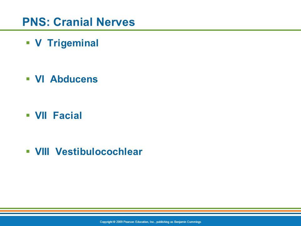 Copyright © 2009 Pearson Education, Inc., publishing as Benjamin Cummings PNS: Cranial Nerves  V Trigeminal  VI Abducens  VII Facial  VIII Vestibu