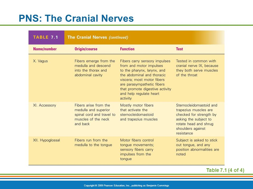 Copyright © 2009 Pearson Education, Inc., publishing as Benjamin Cummings PNS: The Cranial Nerves Table 7.1 (4 of 4)