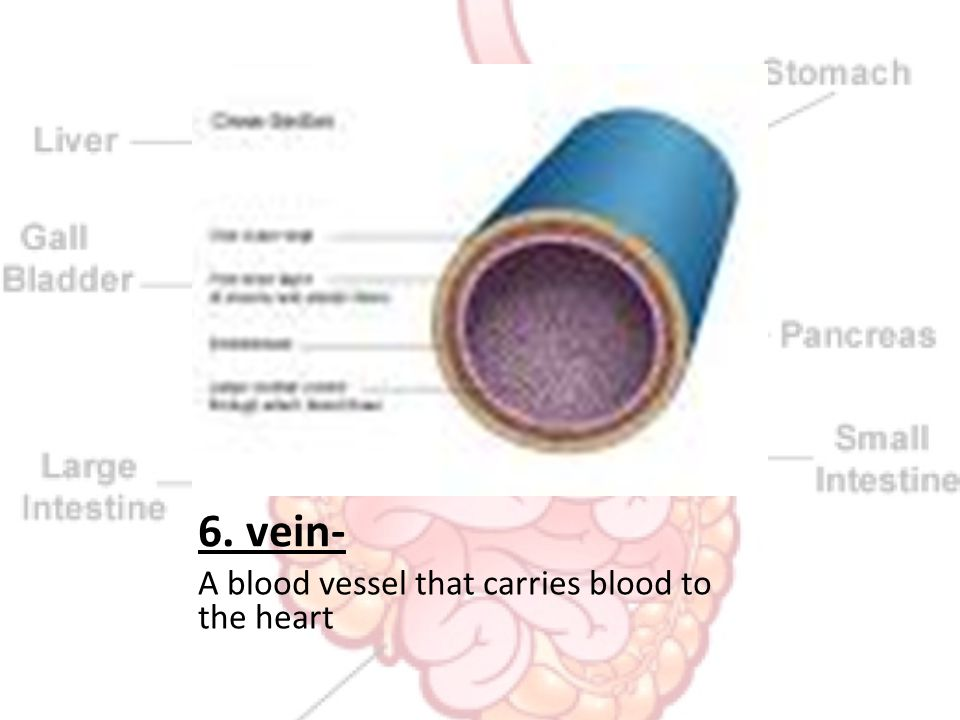 6. vein- A blood vessel that carries blood to the heart