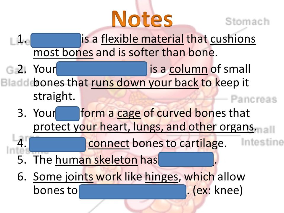1.Cartilage is a flexible material that cushions most bones and is softer than bone. 2.Your spine (backbone) is a column of small bones that runs down