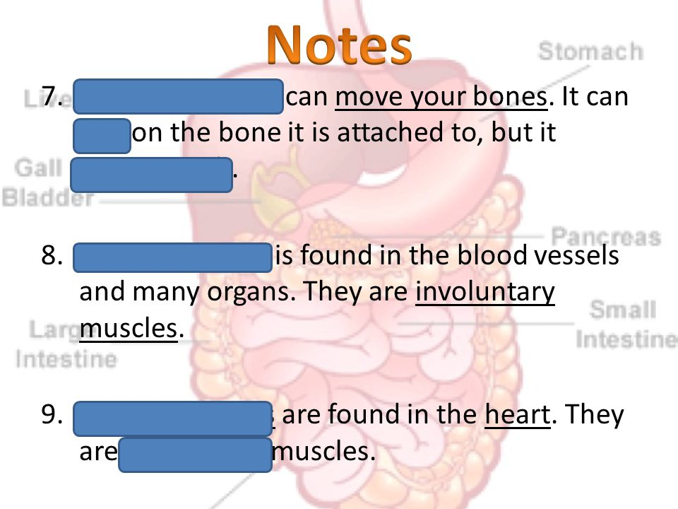 7.Skeletal muscles can move your bones. It can pull on the bone it is attached to, but it cannot push. 8.Smooth muscle is found in the blood vessels a