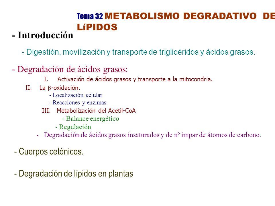 Tema 32 METABOLISMO DEGRADATIVO DE LíPIDOS - Introducción - Digestión, movilización y transporte de triglicéridos y ácidos grasos.