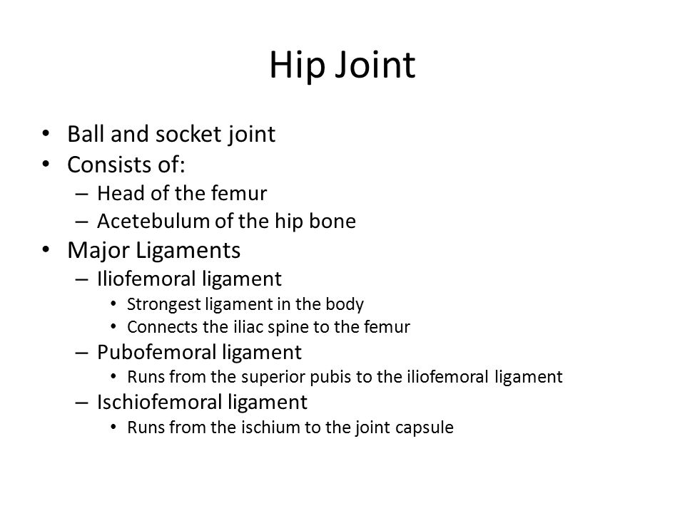 Hip Joint Ball and socket joint Consists of: – Head of the femur – Acetebulum of the hip bone Major Ligaments – Iliofemoral ligament Strongest ligament in the body Connects the iliac spine to the femur – Pubofemoral ligament Runs from the superior pubis to the iliofemoral ligament – Ischiofemoral ligament Runs from the ischium to the joint capsule