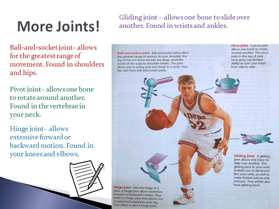 Ball-and-socket joint– allows for the greatest range of movement. Found in shoulders and hips. Pivot joint– allows one bone to rotate around another.