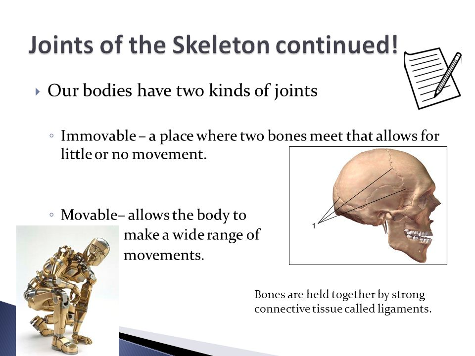 OOur bodies have two kinds of joints ◦I◦Immovable – a place where two bones meet that allows for little or no movement. ◦M◦Movable– allows the body