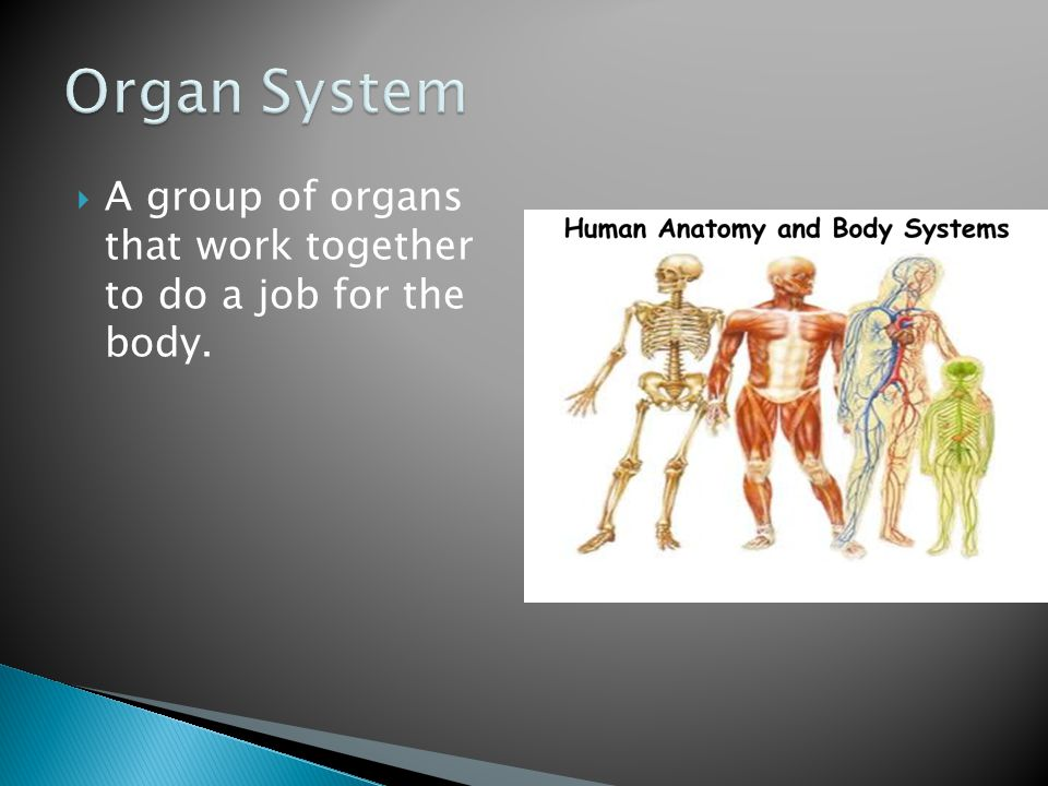  Organs in the human excretory system that removes waste materials for the blood.