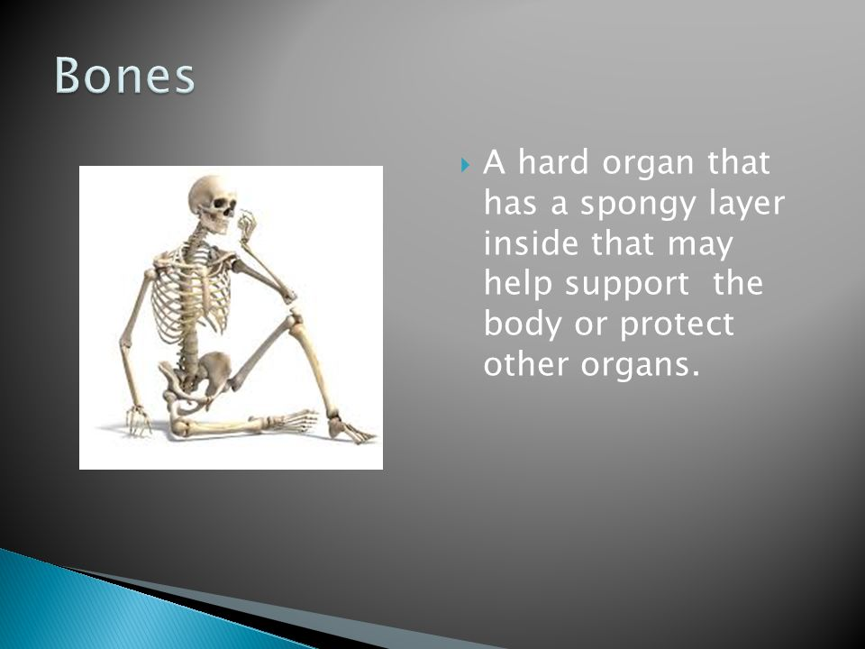  An organ made of bundles of long fibers that can contract and work with bones to help you move.