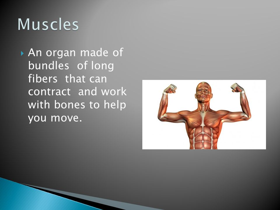  A rope like bundle of nerves that runs along your backbone.