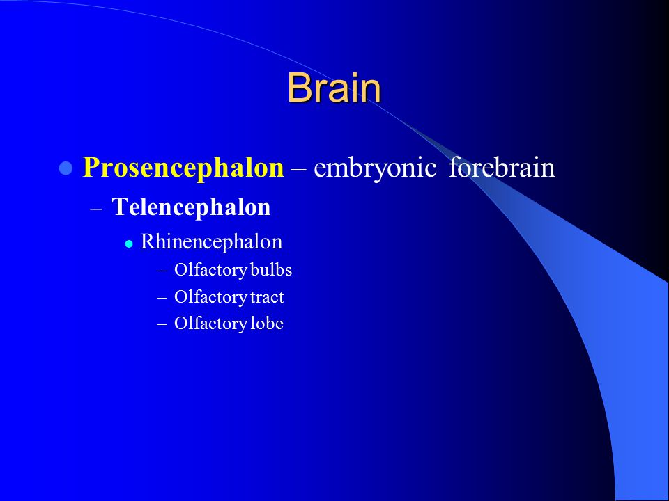 Brain - Prosencephalon Telencephalon – Lateral Ventricles – Cavities in brain that contain – Cerebrospinal fluid (CSF) – Formed from blood vessels called choroid plexus – Circulates around CNS providing cushion, protection, nutrients
