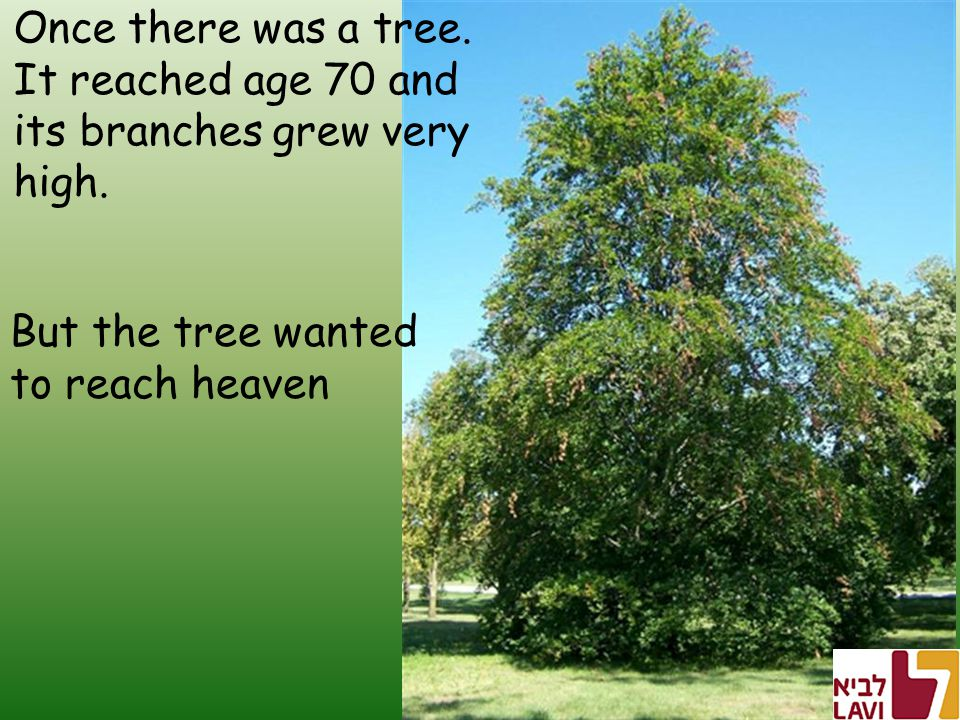 Once there was a tree. It reached age 70 and its branches grew very high.