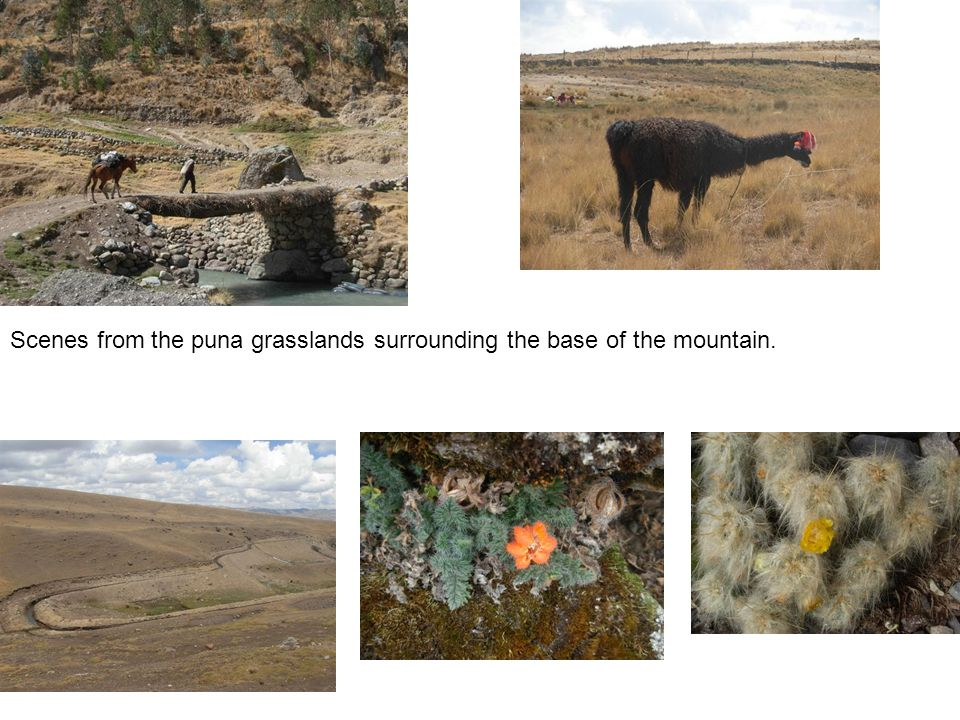 Scenes from the puna grasslands surrounding the base of the mountain.