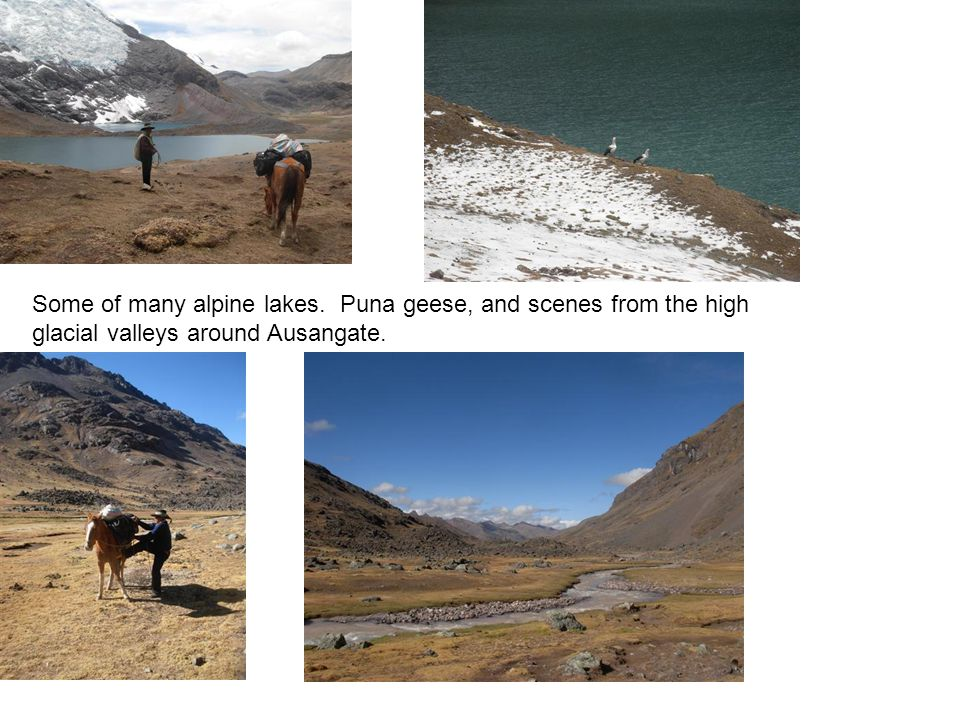 Some of many alpine lakes. Puna geese, and scenes from the high glacial valleys around Ausangate.