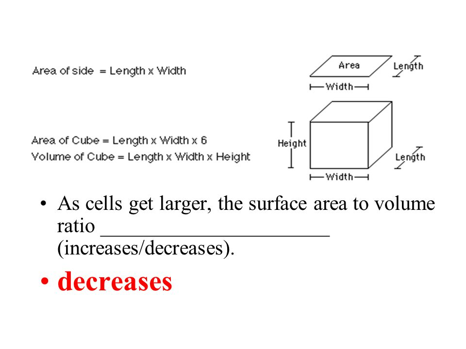 As cells get larger, the surface area to volume ratio ______________________ (increases/decreases).