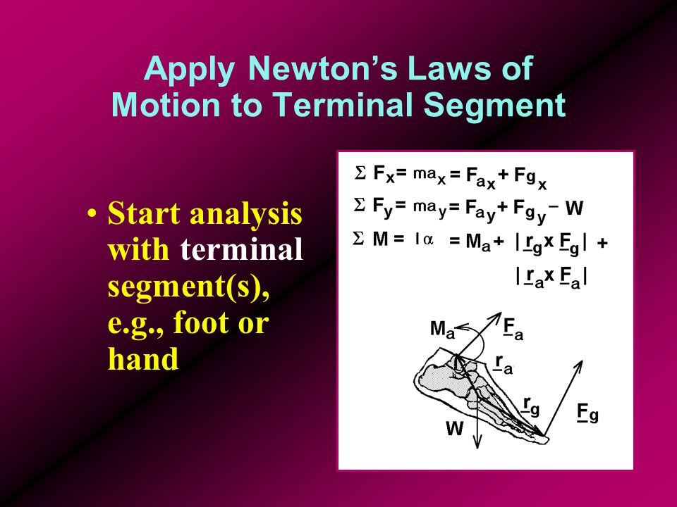 Apply Newton's Laws of Motion to Terminal Segment Start analysis with terminal segment(s), e.g., foot or hand