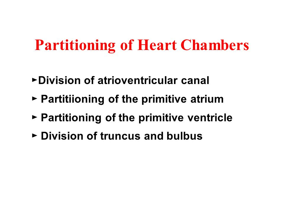 Partitioning of Heart Chambers ►Division of atrioventricular canal ► Partitiioning of the primitive atrium ► Partitioning of the primitive ventricle ►