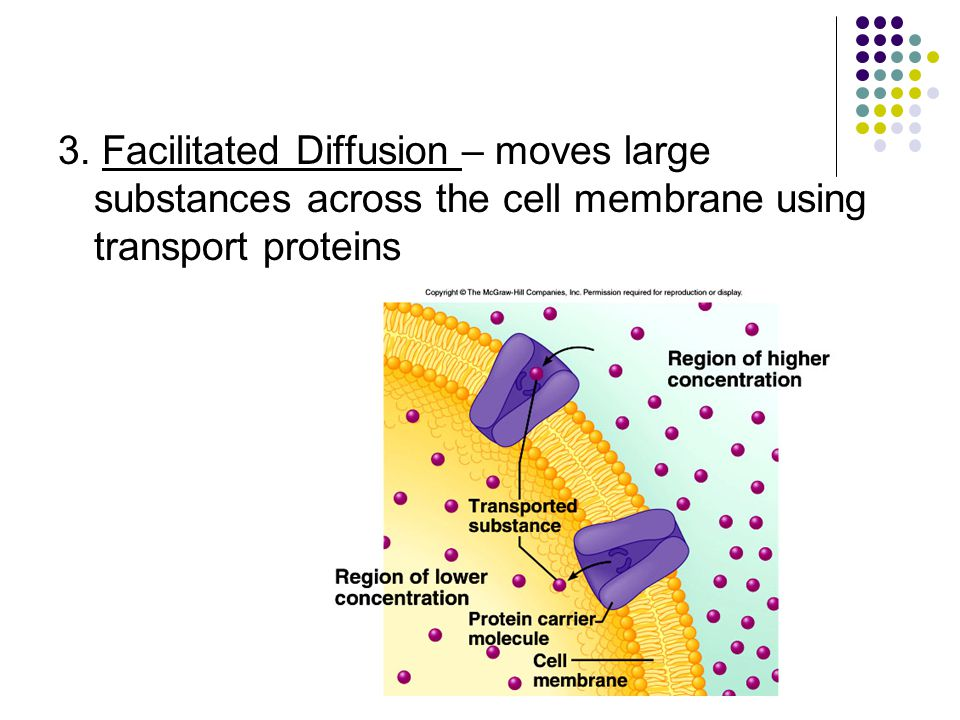 3. Facilitated Diffusion – moves large substances across the cell membrane using transport proteins