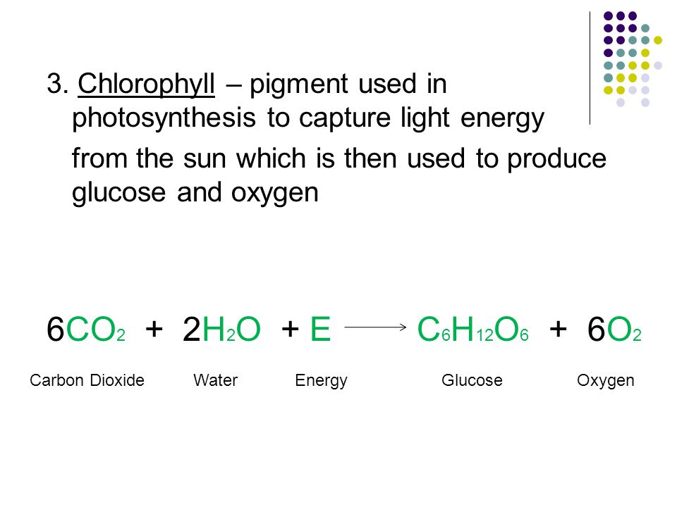 3. Chlorophyll – pigment used in photosynthesis to capture light energy from the sun which is then used to produce glucose and oxygen 6CO 2 + 2H 2 O +