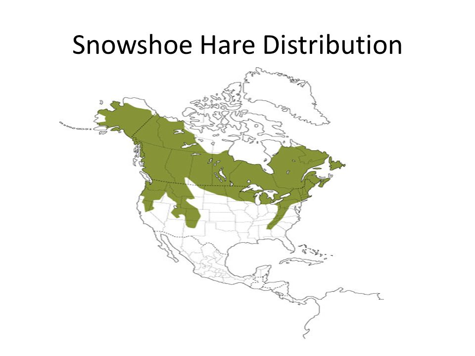 Snowshoe Hare Distribution