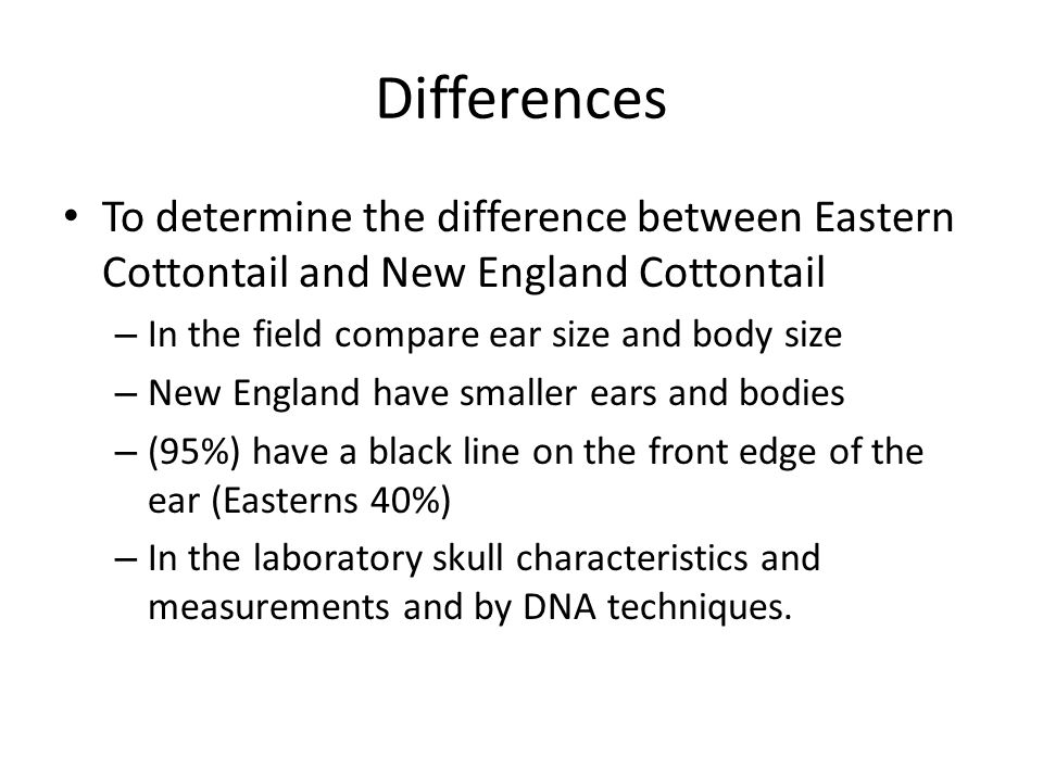 Differences To determine the difference between Eastern Cottontail and New England Cottontail – In the field compare ear size and body size – New England have smaller ears and bodies – (95%) have a black line on the front edge of the ear (Easterns 40%) – In the laboratory skull characteristics and measurements and by DNA techniques.