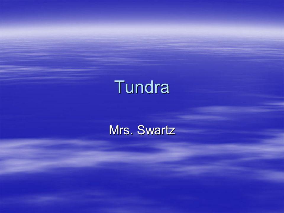 Tundra Mrs. Swartz