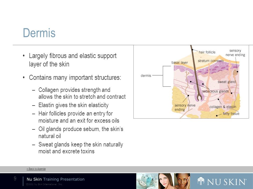 ©2001 Nu Skin International, Inc.< Back to Agenda 20 Night Supply Nourishing Cream Hydrate P.M.