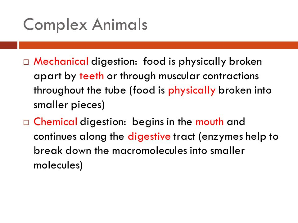 Complex Animals  Mechanical digestion: food is physically broken apart by teeth or through muscular contractions throughout the tube (food is physically broken into smaller pieces)  Chemical digestion: begins in the mouth and continues along the digestive tract (enzymes help to break down the macromolecules into smaller molecules)