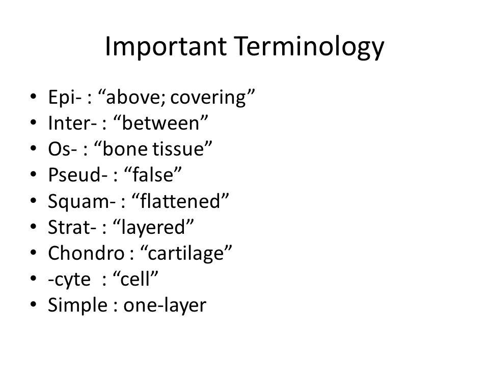"Epi- : ""above; covering"" Inter- : ""between"" Os- : ""bone tissue"" Pseud- : ""false"" Squam- : ""flattened"" Strat- : ""layered"" Chondro : ""cartilage"" -cyte :"