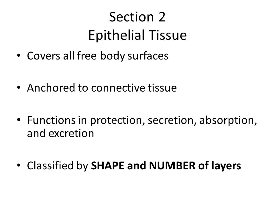 3 layers of Epithelium Simple—One layer Pseudostratified—appears to be more than one layer Stratified—two or more layers of cells
