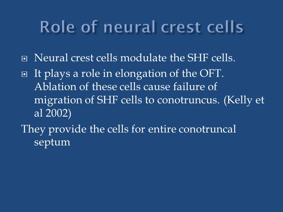  Neural crest cells modulate the SHF cells. It plays a role in elongation of the OFT.