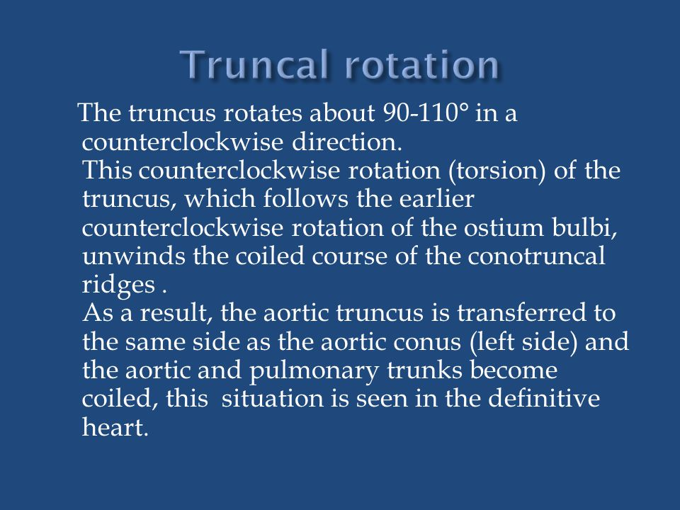 The truncus rotates about 90-110° in a counterclockwise direction. This counterclockwise rotation (torsion) of the truncus, which follows the earlier