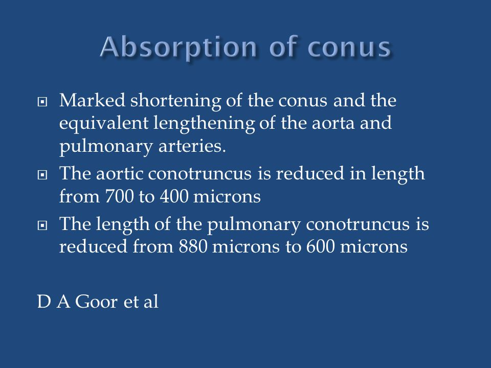  Marked shortening of the conus and the equivalent lengthening of the aorta and pulmonary arteries.