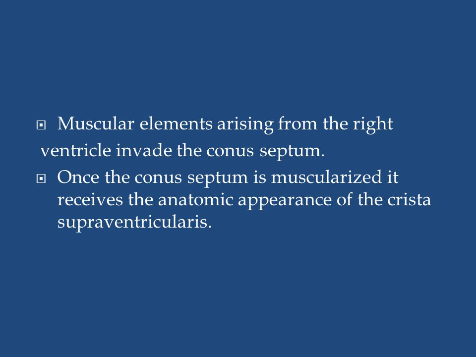  Muscular elements arising from the right ventricle invade the conus septum.  Once the conus septum is muscularized it receives the anatomic appeara