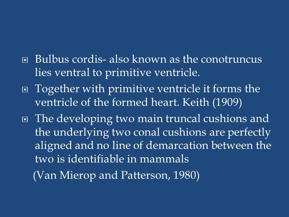  Bulbus cordis- also known as the conotruncus lies ventral to primitive ventricle.  Together with primitive ventricle it forms the ventricle of the